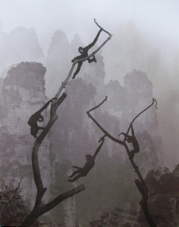 Don Hong Oai Gibbons